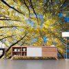 סטיק שופ - טפט טבע מנוחה ביער