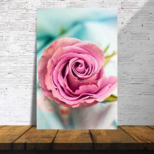 פוסטרים - ורד